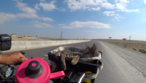 Finding a Kitten on the Road 2